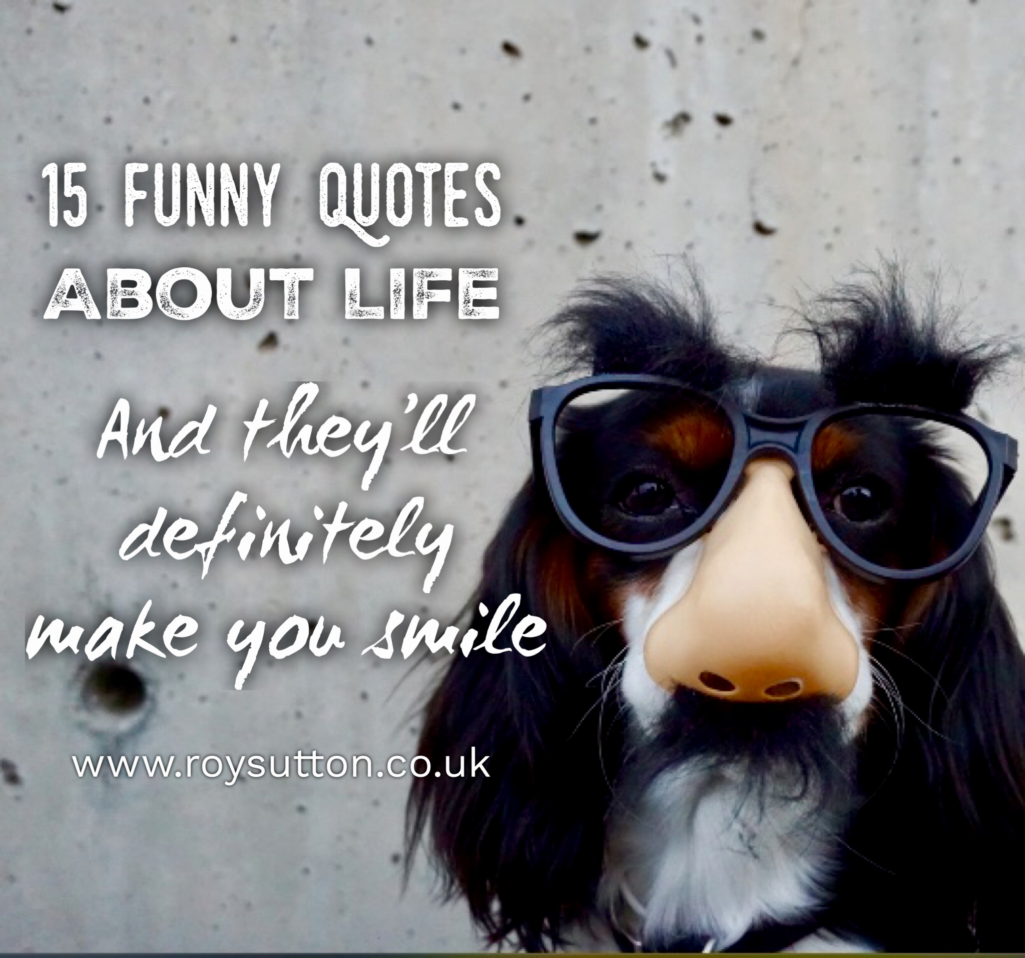 15 Funny Quotes About Life And Theyll Definitely Make You Smile