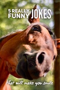 Really Funny Jokes