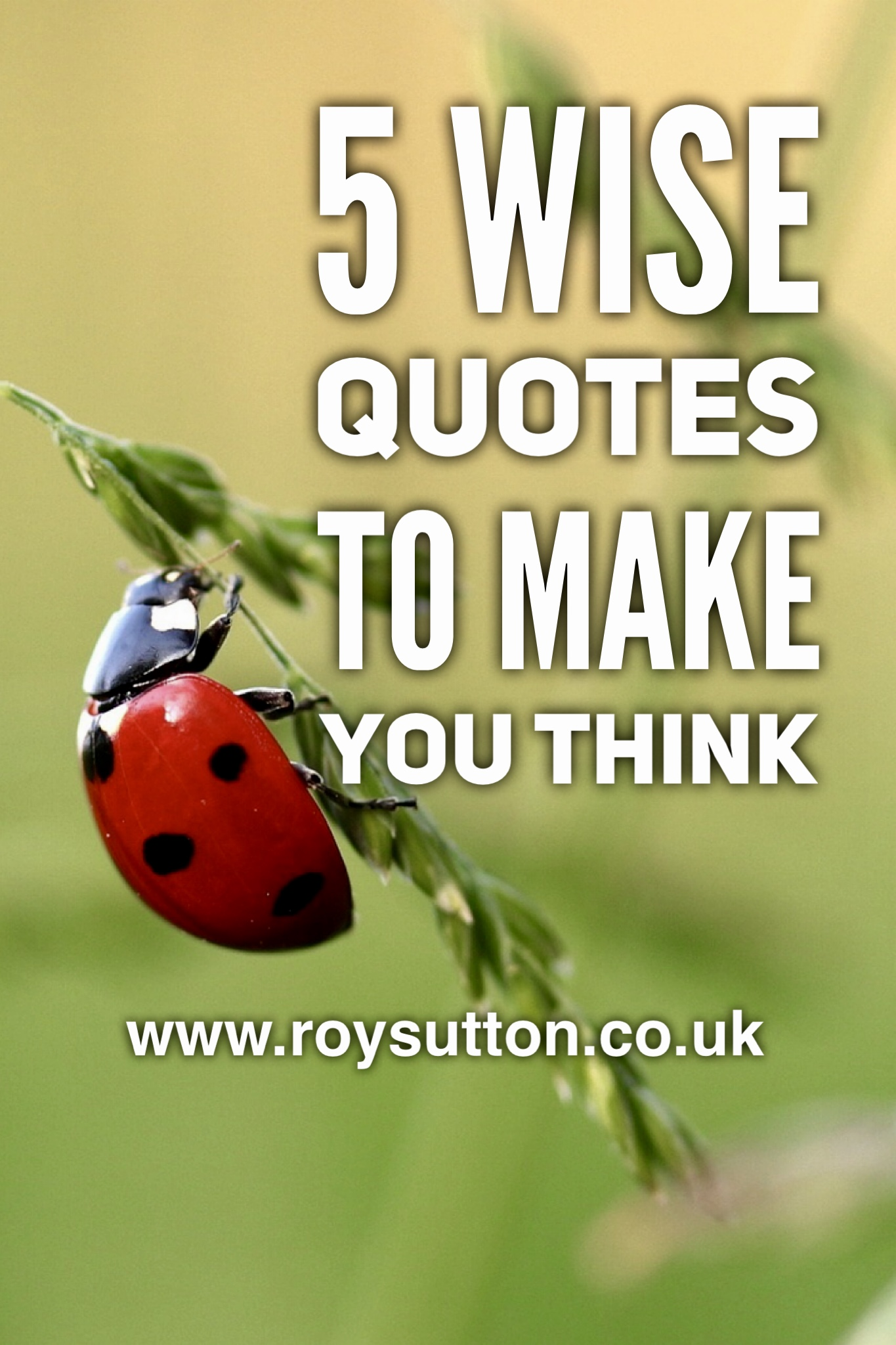 5 wise quotes to make you think roy sutton